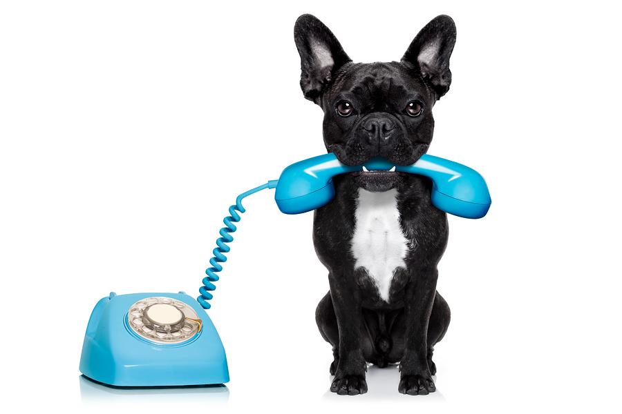 Dog Making Emergency Phone Call