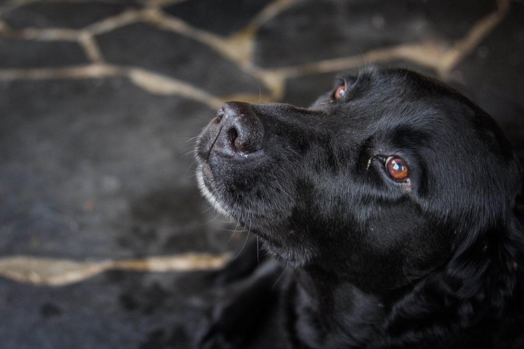 Dog loving companion