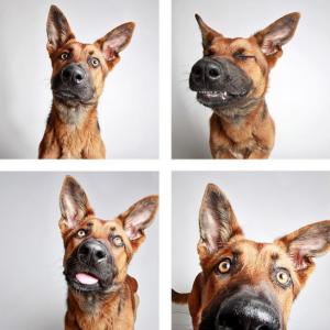 dog photo booth