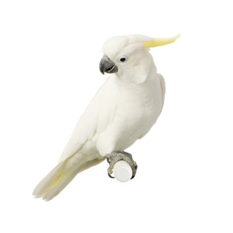parrot games
