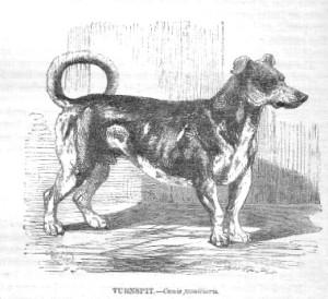 Extinct Dog Breeds Turnspit