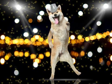 Oaktown Pup