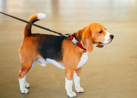 Fetch! Pet Care Spills the Beans on Dog Walker Secrets!