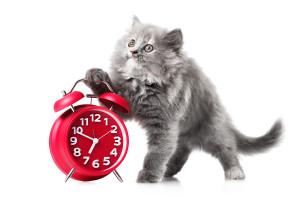 cat, cat schedule