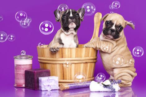 How to bathe a dog - Fetch! Pet Care