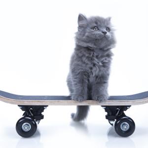 Skateboarding Cat Amazes the Internet