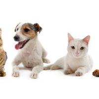 most read blogs, cat blog, dog blog, cats, dogs, diy
