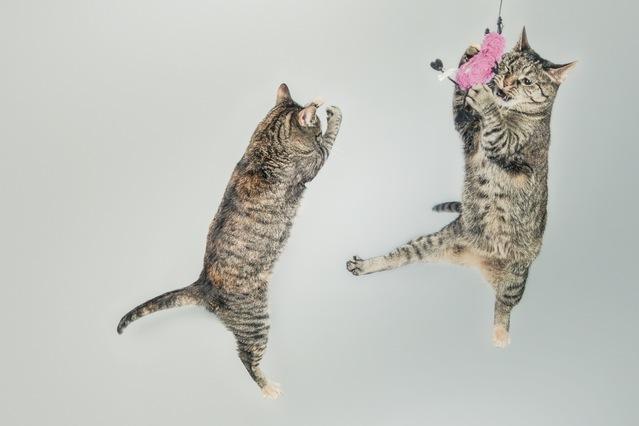 jumping-cute-playing-animals