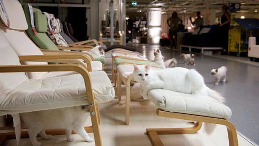 IKEA cats, cat true stories, cats