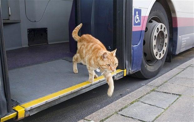 artful dodger cat, cats, cat true stories