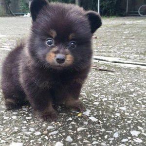 puppy, aww