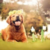 personality, quiz, facebook quiz, spring, flower