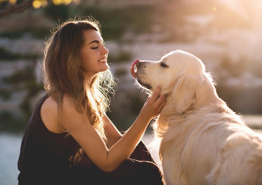 dog walking, pet sitting, pet sitter, dog walker, Fetch! Pet Care