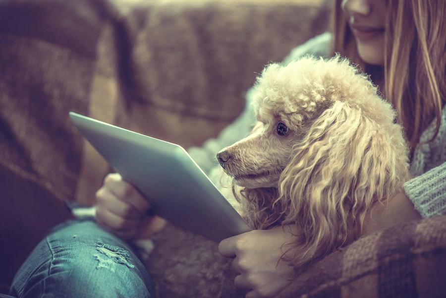 blog, dog walking, pet sitting, Fetch! Pet Care, Patrick Stewart, pet safety