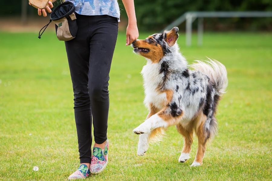 dog training, positive reinforcement