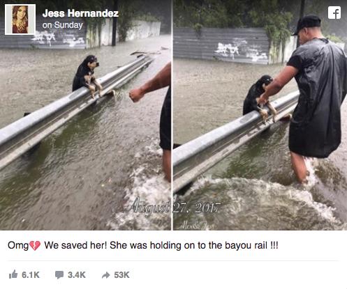 Hurricane Harvey pets