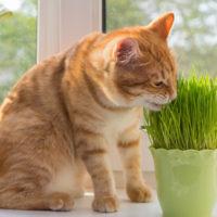 catnip, cat