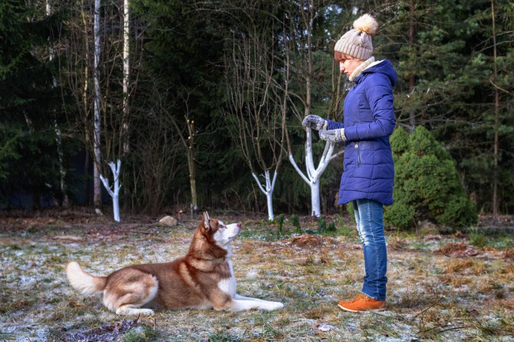 Conéctate con la mascota entrenándola