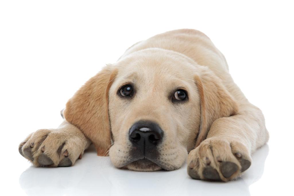 Creando una conexión con un cachorro triste