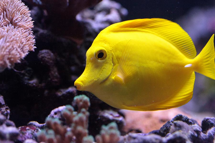 fish depression