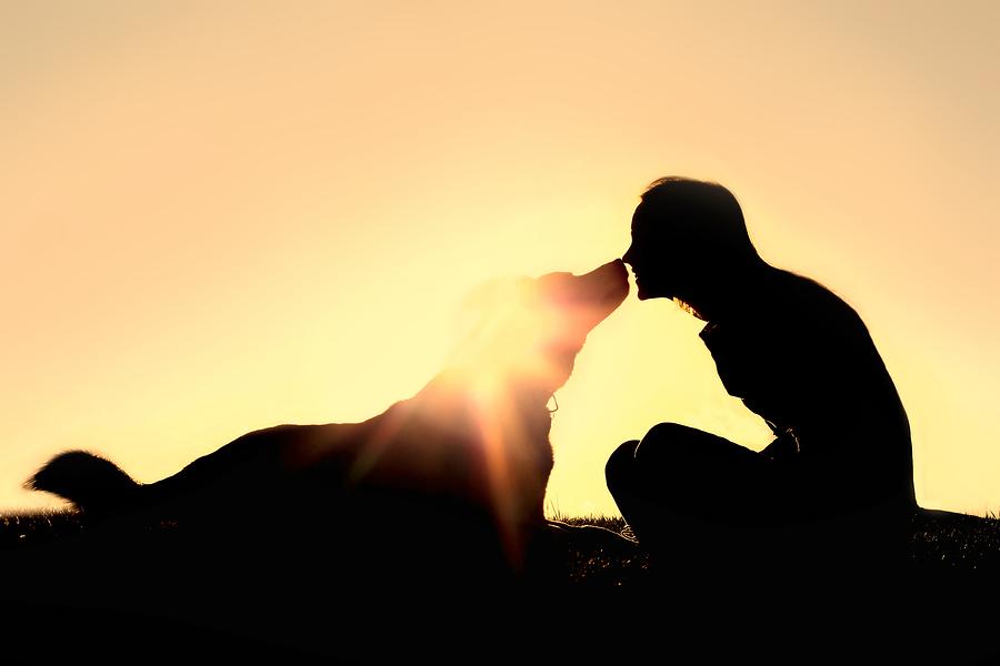 adopt, dog adoption, pet adoption