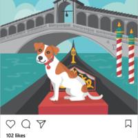 dog instagram