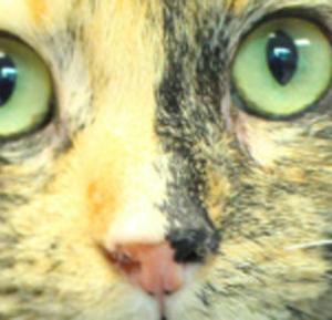 Tale of Three Kitties 1000x289