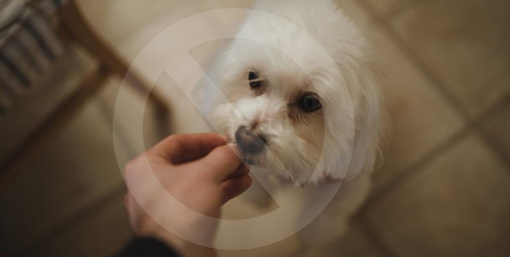Feeding Dog A Treat